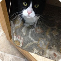 Adopt A Pet :: Whiskers - Colorado Springs, CO