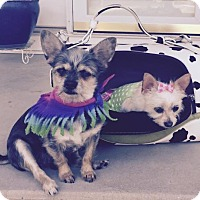 Adopt A Pet :: Moses and Rosie - Ruma, IL
