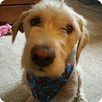 Adopt A Pet :: Shiloh - Davenport, IA