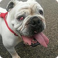 Adopt A Pet :: Romeo - Columbus, OH