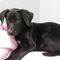 Adopt A Pet :: York - Groton, MA