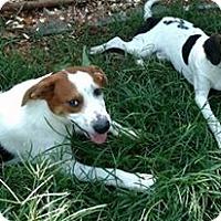 Adopt A Pet :: Pabst - Salisbury, NC