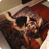 German Shepherd Dog Dog for adoption in Montgomery, Alabama - Jordi