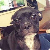 Adopt A Pet :: Simon - Dayton, OH