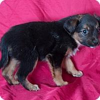 Adopt A Pet :: MO - Sonora, CA