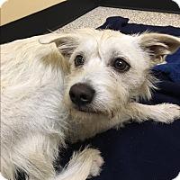 Adopt A Pet :: Dakota - Thousand Oaks, CA