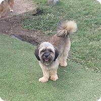 Adopt A Pet :: Rockwell - Carrollton, TX