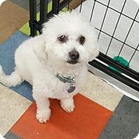 Adopt A Pet :: Casper - House Springs, MO
