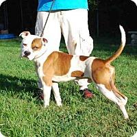 Adopt A Pet :: HOWARD - Louisville, KY