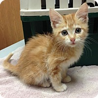 Adopt A Pet :: Pumpkin - Larned, KS