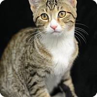 Adopt A Pet :: Eggnog162204 - Atlanta, GA