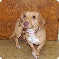 Adopt A Pet :: Alice - Warsaw, IN
