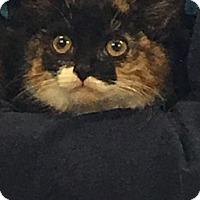 Adopt A Pet :: Roxi - Island Park, NY