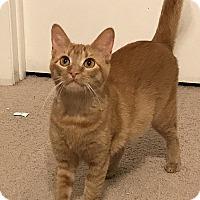 Adopt A Pet :: Sarabi - Tampa, FL