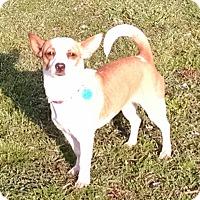 Adopt A Pet :: Cara - Cat Spring, TX