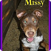 Adopt A Pet :: Missy - Plano, TX