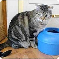 Adopt A Pet :: Cinnamon FE1-3737 - Thibodaux, LA