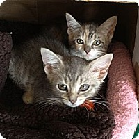 Adopt A Pet :: Leo & Pepper - Island Park, NY