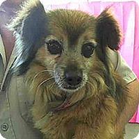Adopt A Pet :: Stewart URGENT - San Diego, CA