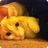 Adopt A Pet :: Micky - Davis, CA