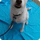 Adopt A Pet :: joseph