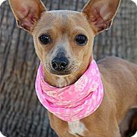 Adopt A Pet :: Kiki - Rancho Palos Verdes, CA