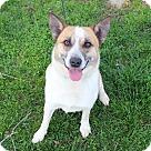 Adopt A Pet :: Conley