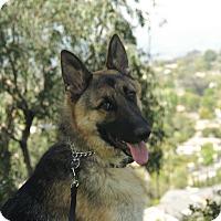 Adopt A Pet :: Trevor - Laguna Niguel, CA