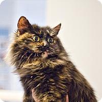 Adopt A Pet :: Daisy - Lincoln, NE