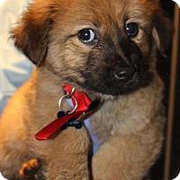 Adopt A Pet :: Wells Fargo - Royal Palm Beach, FL