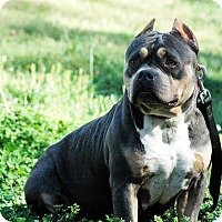 Adopt A Pet :: MJ ( Marry Jane) - Lawrenceville, GA