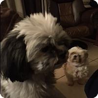 Adopt A Pet :: Elvis - Naples, FL
