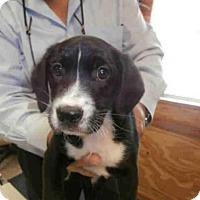Adopt A Pet :: HAMILTON - Naples, FL