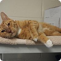 Adopt A Pet :: Jerome - Mt Vernon, NY