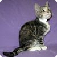 Adopt A Pet :: Jarvis - Powell, OH