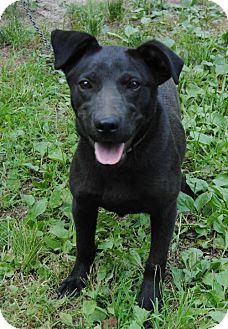Labrador Retriever Mix Dog for adoption in Sunbury, Ohio - Lucy Diamond