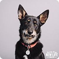 Adopt A Pet :: Maurice - Portland, OR