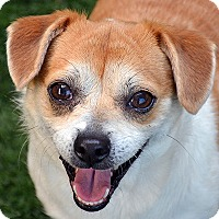 Adopt A Pet :: Pearl - Burlingame, CA