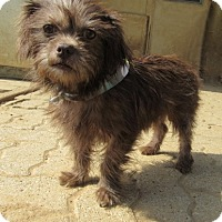 Adopt A Pet :: Frizzell - Bedford, TX