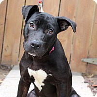 Adopt A Pet :: Shannon - Los Angeles, CA
