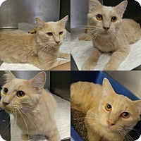 Adopt A Pet :: T-2 - Triadelphia, WV
