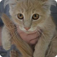 Adopt A Pet :: Edward - Danbury, CT