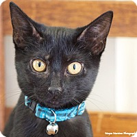 Adopt A Pet :: Pollyanna - Huntsville, AL