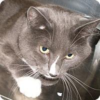 Adopt A Pet :: Bootsie - Buhl, ID