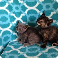 Adopt A Pet :: Puddin and Pie - Thomaston, GA