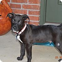 Adopt A Pet :: Sutton - Glastonbury, CT