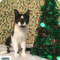 Adopt A Pet :: Carlos - Stud! - Huntsville, ON