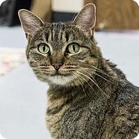 Adopt A Pet :: Juniper - St. Paul, MN