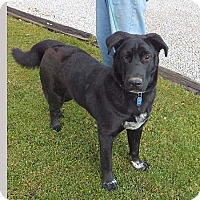 Adopt A Pet :: Zack - Rootstown, OH