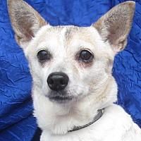 Adopt A Pet :: Choo Choo - Cuba, NY